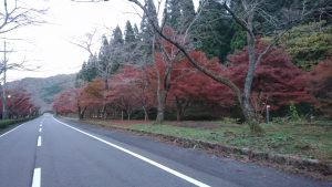 紅葉の秋‼️